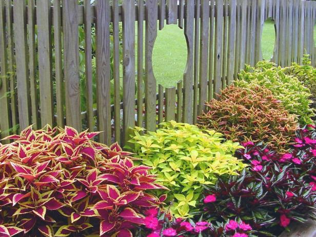 august-color_coleus-collection-fence.jpg.rend.hgtvcom.616.462